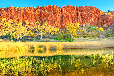 Scenic red sandstone wall and bush vegetation reflected in waterhole, Glen Helen Gorge at West MacDonnell Ranges, Central Australian Outback along Red Centre Way, Northern Territory, Australia, Pacific