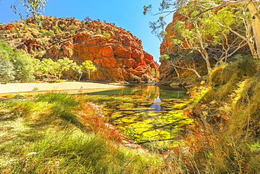 Panoramic view of Ellery Creek Big Hole waterhole in West MacDonnell Ranges surrounded by red cliffs and bush outback vegetation, Northern Territory, Central Australia, Australia, Pacific