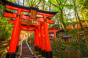 Thousand torii gates, Fushimi Inari Taisha, the most important Shinto shrine, Kyoto, Japan, Asia