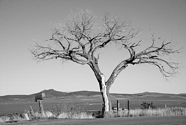 Rural scene in Taos, New Mexico, United States of America, North America