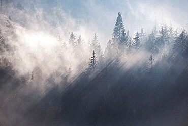 Fog and cloud rake through the trees of a forest near Rossland, British Columbia in autumn.