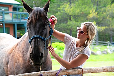 A young woman grooms a horse at a stable before a trail ride in Merritt, British Columbia, Canada, North America