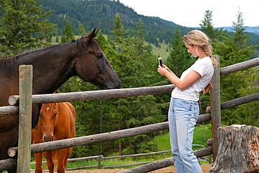A trail rider takes a photo of a horse with her smartphone back at the corral, Merritt, British Columbia, Canada, North America