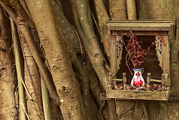 A wooden tree shrine on a Banyan tree, containing a ceramic vase and a bunch of twigs, Yangon (Rangoon), Myanmar (Burma), Asia