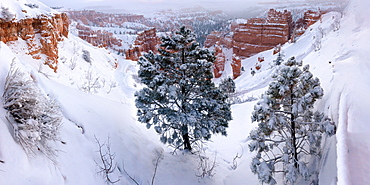 Bryce Canyon from Sunset Point, Bryce Canyon National Park, Utah, United States of America, North America
