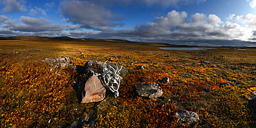 Reindeer antlers piled up in Canadian Tundra, Nunavut and Northwest Territories, Canada, North America