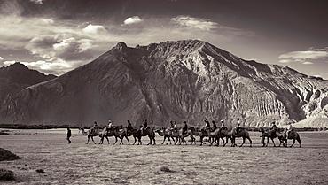 Tourists enjoying camel ride in the Nubra Valley in Ladakh region of India, Ladakh, India, Asia