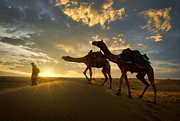 A camel trader in the famous Sam Sand dunes in Jaisalmer region of Rajasthan state, India, Asia
