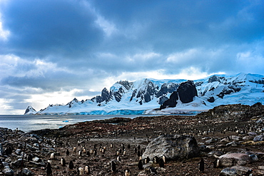 Penguin colony with snow covered mountain in background, Antarctica, Polar Regions