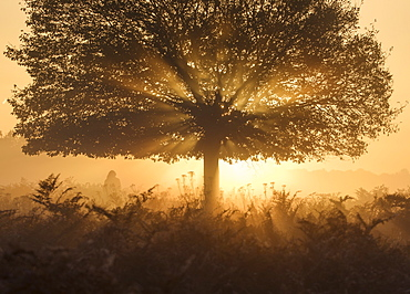 A stunning misty sunrise and light rays one autumn in Richmond Park, Richmond, Greater London, England, United Kingdom, Europe