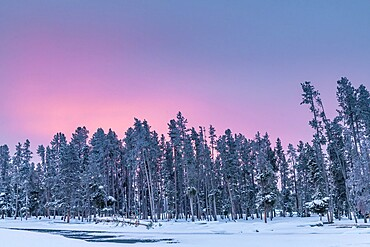 Morning light over snow covered trees, Yellowstone National Park, Wyoming, United States