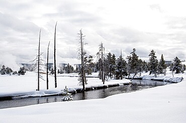 Snowscape of winding river and trees, Yellowstone National Park, Wyoming, United States