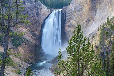 Lower Falls of the Grand Canyon framed in trees, Yellowstone National Park, UNESCO World Heritage Site, Wyoming, United States of America, North America