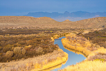 Rio Grande River in golden grasses with Chisos Mountains in background, Big Bend National Park, Texas, United States of America, North America