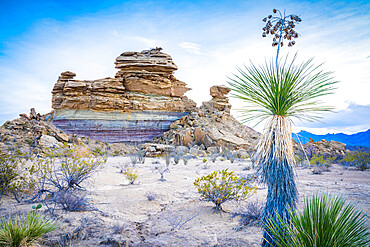 Desert view with yucca plant, Big Bend National Park, Texas, United States of America, North America