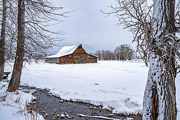 Moulton barn in the snow framed by trees, Grand Teton National Park, Wyoming, United States of America, North America