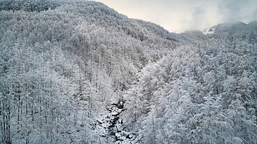 Beech forest covered by snow in a pristine winter landscape, Parco Regionale del Corno alle Scale, Emilia Romagna, Italy, Europe