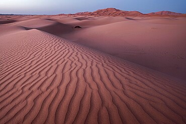 Blue hour on the Sahara Desert sand dune patterns, Erg Chebbi, Merzouga, Morocco, North Africa, Africa