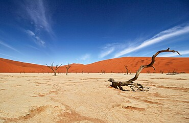 Deadvlei, near Sossusvlei, a dry lake with dead trees in the desert made of red sand dunes, Namib Desert, Namibia, Africa