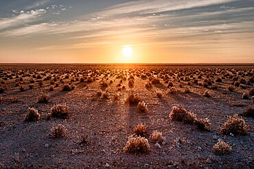 Sunrise in Etosha savannah with small bushes projecting long shadows, Namibia, Africa