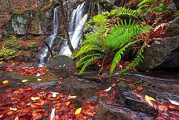 Fern and waterfalls, Dardagna Waterfalls, Parco Regionale del Corno alle Scale, Emilia Romagna, Italy, Europe