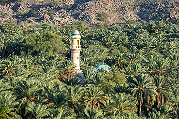 A minaret and a mosque in the middle of a palm oasis, Oman, Middle East