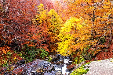 Autumn foliage colors in the woods, Parco Regionale del Corno alle Scale, Emilia Romagna, Italy, Europe