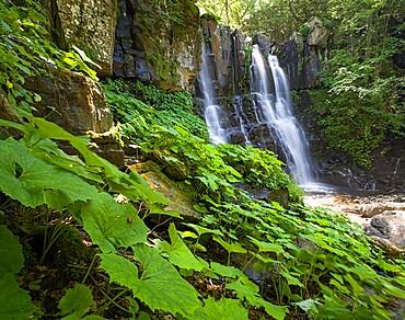 Acquatic plants at Dardagna waterfalls in summer, Parco Regionale del Corno alle Scale, Emilia Romagna, Italy, Europe