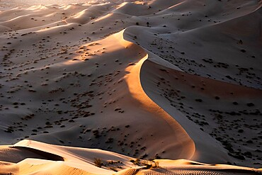 Sunset light on the sand dunes of Rub al Khali desert, Oman, Middle East