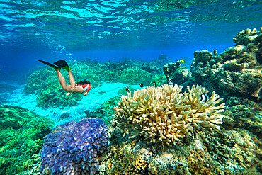 An athletic woman free-diving through a colorful reef of French Polynesia, South Pacific islands, Pacific