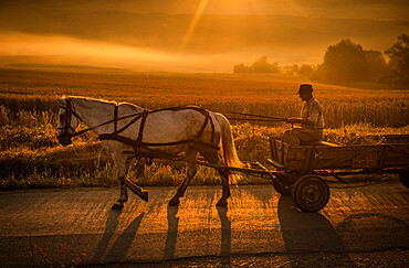 An elderly man on his way to collect hay in his horse-drawn wagon at dawn, Romania, Europe