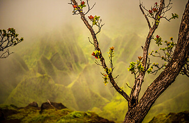 A tree branch with fresh growth in front of a soft backdrop of the NaPali Coast mountains.