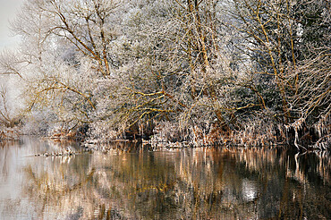 Frosted trees reflected in a calm river on a cloudy morning in County Galway, Connacht, Republic of Ireland, Europe