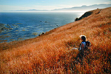 A young woman hiker rests in a wild grass field on the coast of New Zealand's Kaikoura Peninsula, Canterbury Region, South Island, New Zealand, Pacific