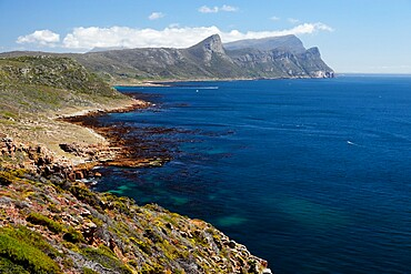 Cape Point Nature Reserve, False Bay, Western Cape, South Africa, Africa