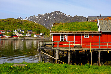 Traditional turf roofs and red buildings in the charming cod fishing village of Reine, Lofoten Islands, Nordland, Norway, Scandinavia, Europe