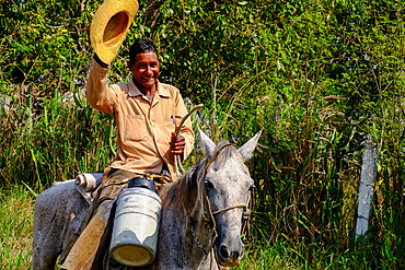 A cowboy on a mule waves his straw hat, Arimao, Cuba, West Indies, Central America
