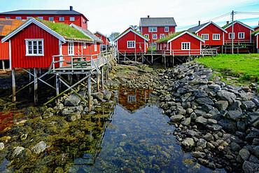 Red buildings grace the shoreline in the cod fishing village of Reine, Lofoten Islands, Nordland, Norway, Scandinavia, Europe