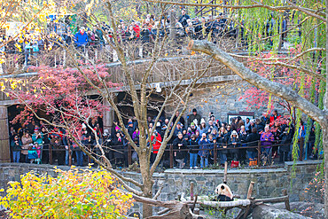 A large crowd watches Bei Bei the Giant Panda on the eve of his departure to China. Smithsonian National Zoo, Washington DC