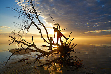 Brother and sister on the branches of a dead tree at Jockeys Ridge State Park, Nags Head NC. Albemarle Sound. MR