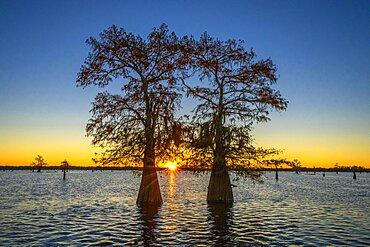 Atchafalaya Basin, Louisiana