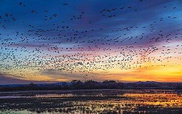 Flocks of Birds in Flight