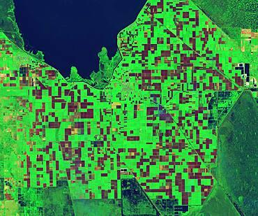 Sugarcane Fields, Controlled Burn, Infrared Satellite Image