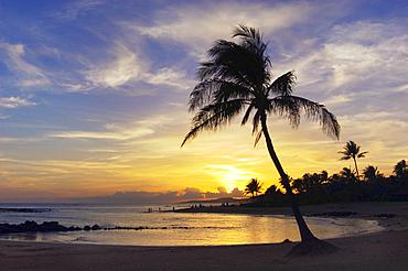 Sunset at Poipu Beach Park with palm tree and swimming cove; Poipu, Kauai, Hawaii.