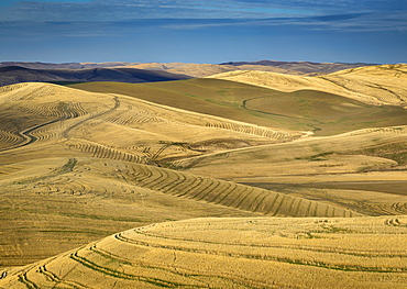Harvested wheat field from crest of Miller Road; Walla Walla County, Washington.