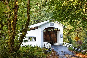 Wildcat Bridge, also known as the Austa Bridge, on Wildcat Creek at the Siuslaw River; Coast Range Mountains, Oregon.