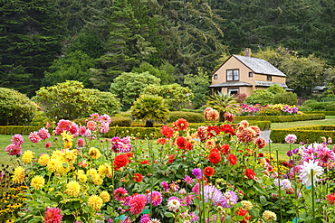 Dahlias and the cottage in the gardens at Shore Acres State Park on the southern Oregon Coast.
