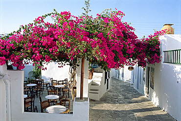 Side street, white walls, cafe and bougainvillea in Apollonia, on Sifnos, Cyclades Islands, Greek Islands, Greece, Europe