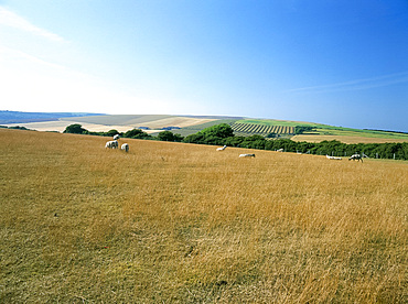 The South Downs, East Sussex, England, United Kingdom, Europe