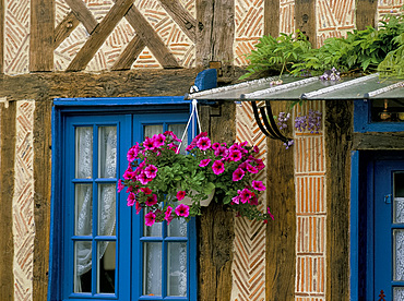Hanging basket of petunias on traditional brick and timber house, Normandy, France, Europe